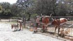 Longhorn enrichment on train ride.kris ledoux on right