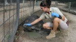marcy griffith with tortoise