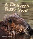 BeaversBusy_128