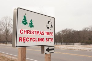 christmas_tree_recycling