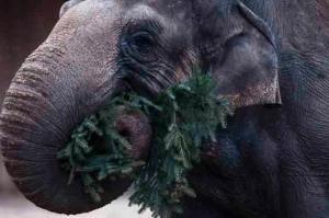 elephant-2-0105