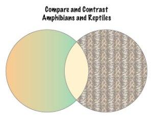 Amphib-Rept