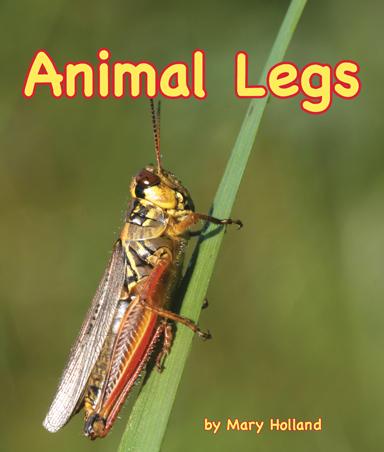 animallegs_cover