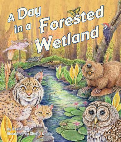 DayForestWet