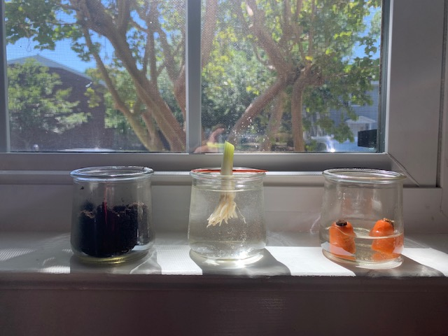 planting jars